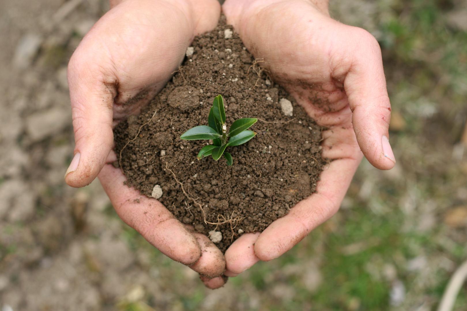 handful-of-dirt-1-1400915